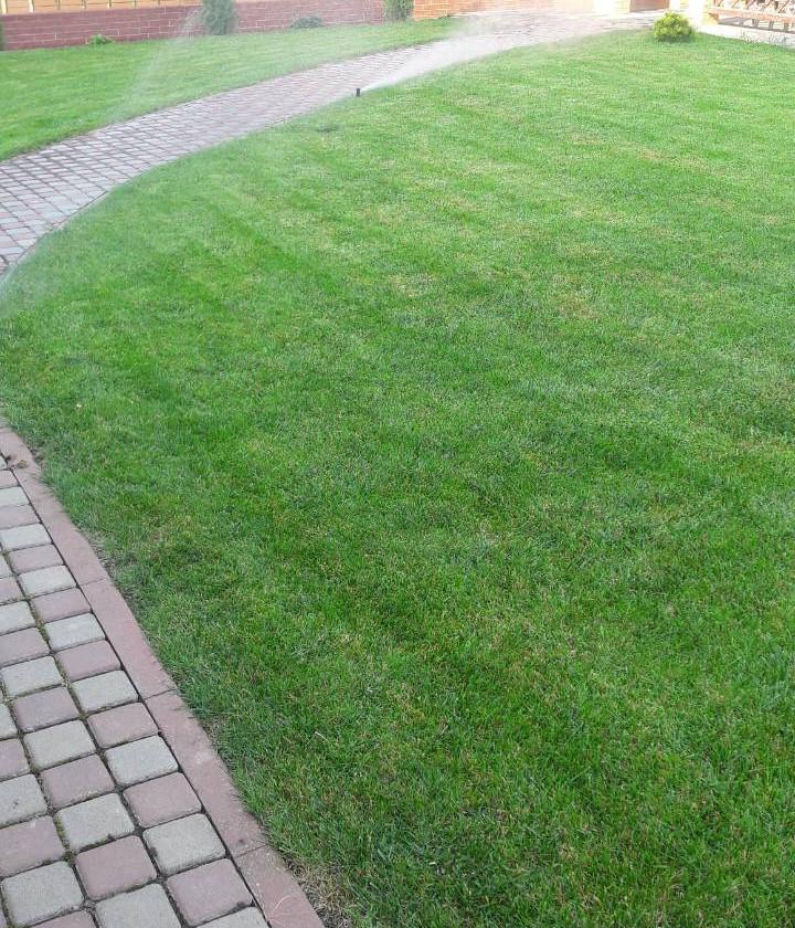 Рулонная трава Одесса