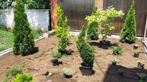 Соблюдение размеров растений при посадке