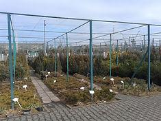 Выстовочная площадка продажи растений