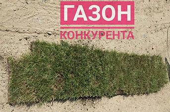 Рулонный газон конкурента Днепр