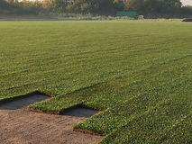 установка газона в Одессе