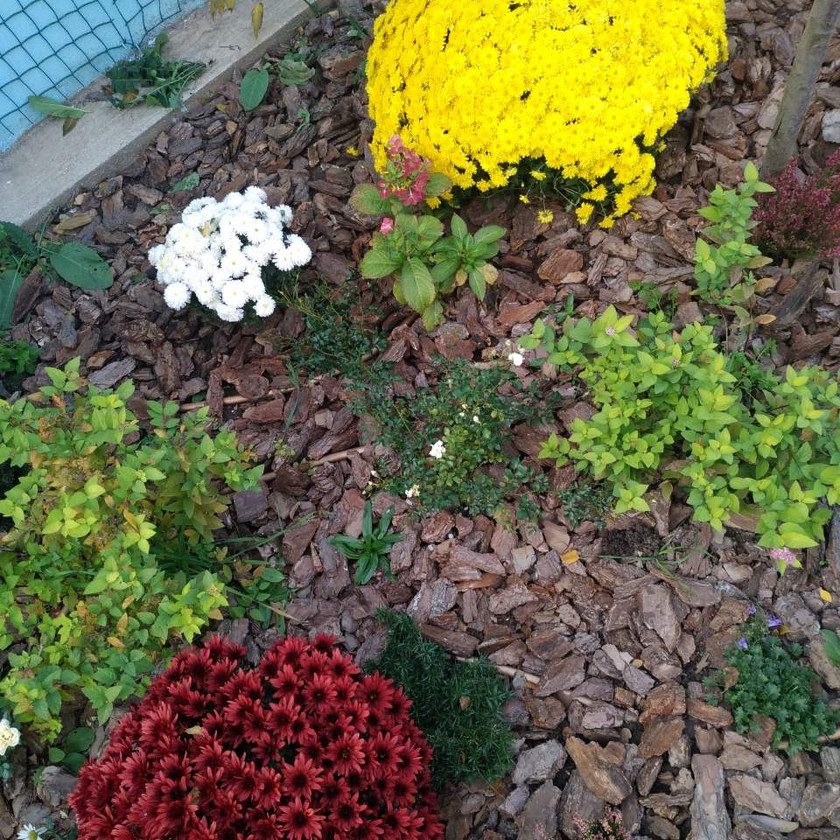 Цветник постоянно цветущий Одесса