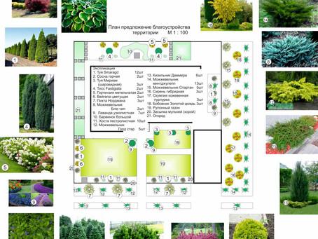 Озеленение дома в поселке Совиньон, Одесса
