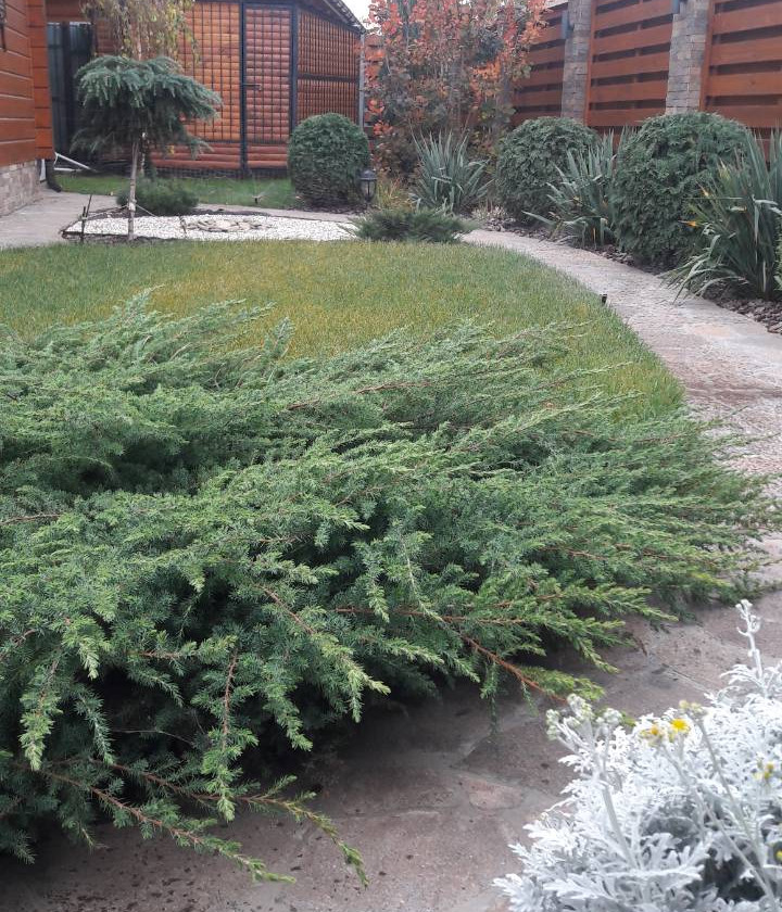 Концепция сада - дорожки,  газон,  хвойные и лиственные растения.