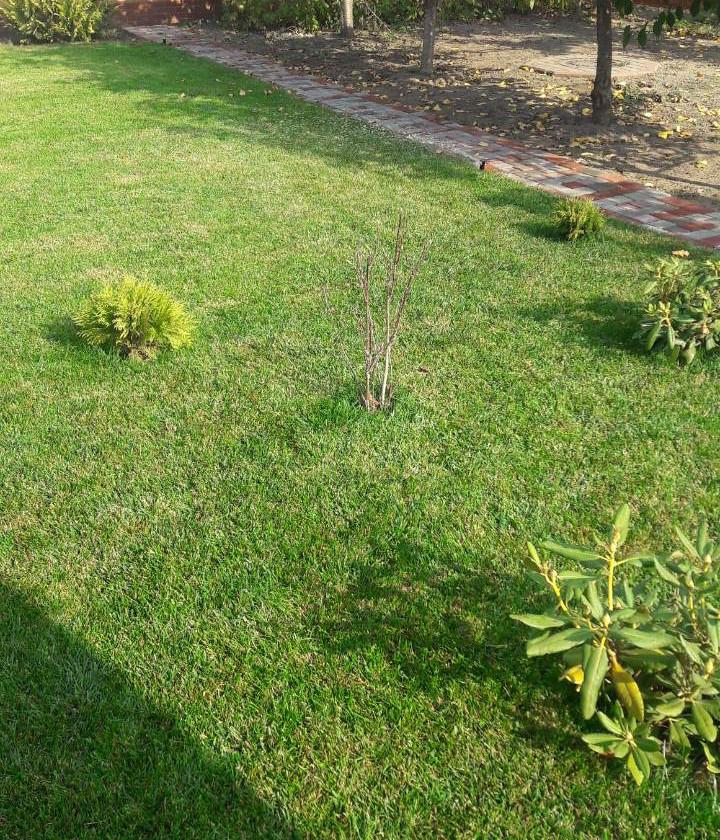 Растения в Рулонном газоне