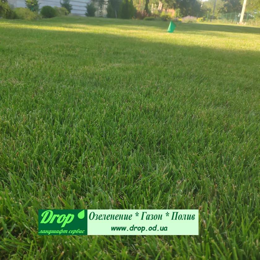 Рулонный газон и озеленение в