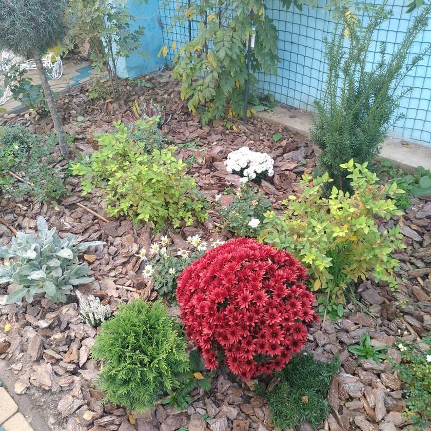Сочетание хвойных и многолетних растений