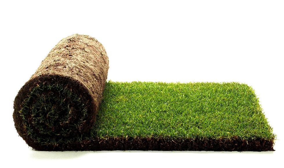 купить рулонный газон Одесса