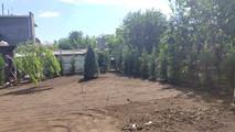 Посадка кипарисовиков в живую изгородь