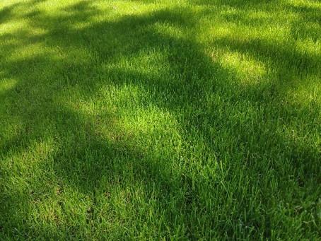 Сделать красивый газон в Одессе