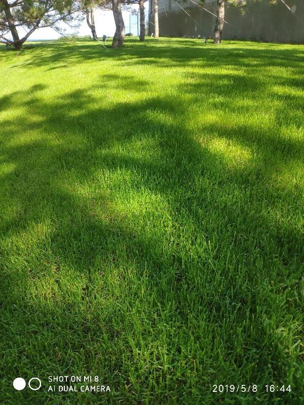 Сделать газон Одесса