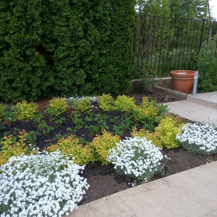 Озеленение дома с помощью цветников в Одессе