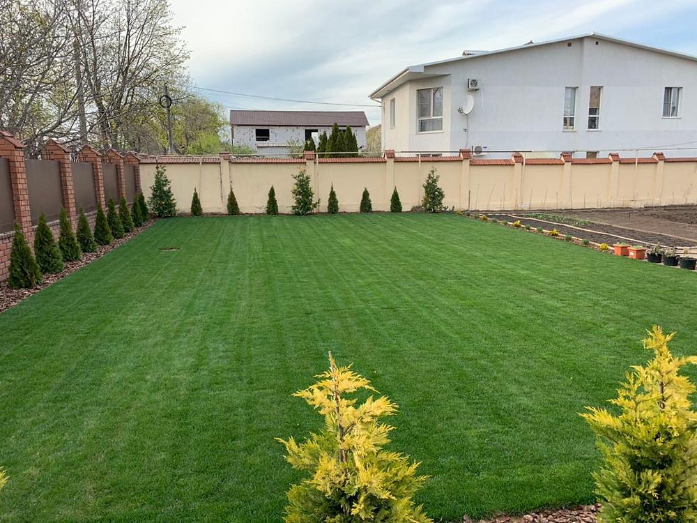 Постеленный газон через 2 недели