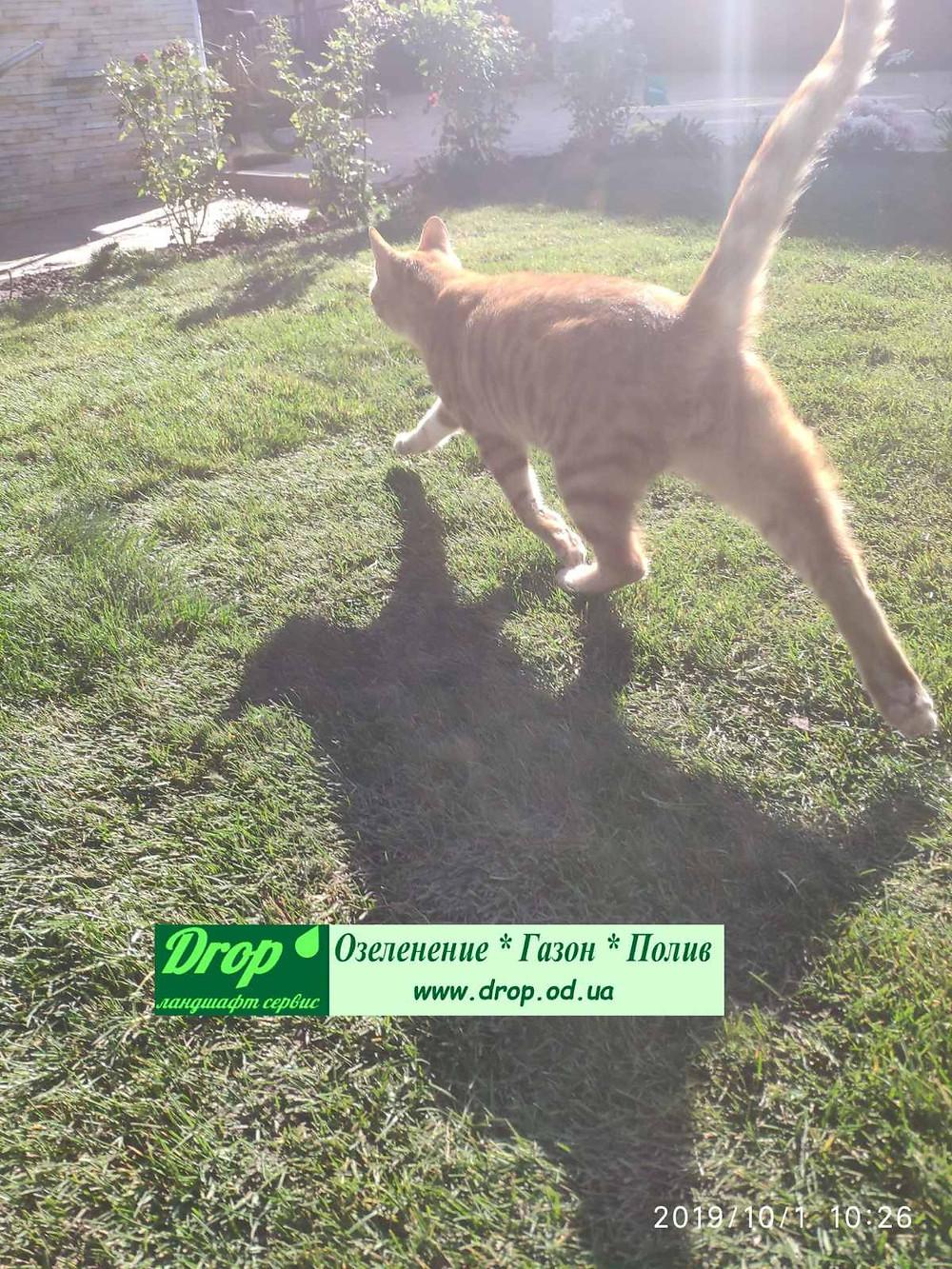 Постелили рулонный газон в Одессе