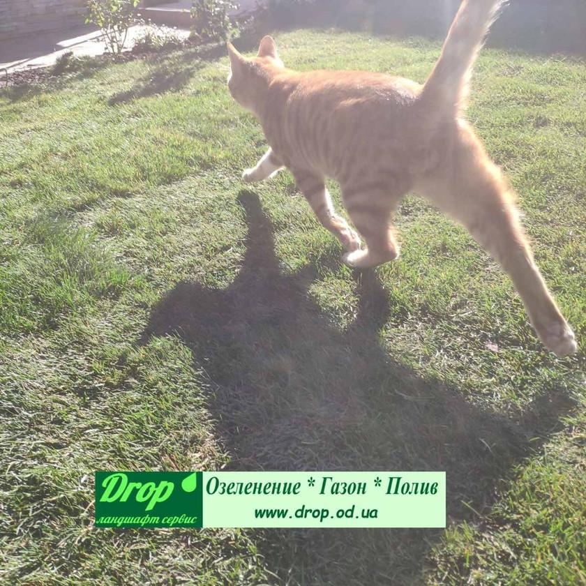 Зеленая газонная трава в рулонах