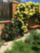 Применение розы плетущей в ландшафтном дизайне
