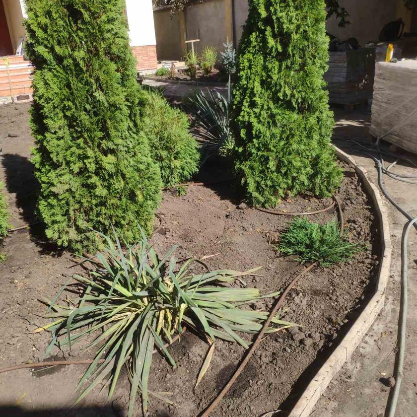 Капельный полив живой изгороди в Одессе