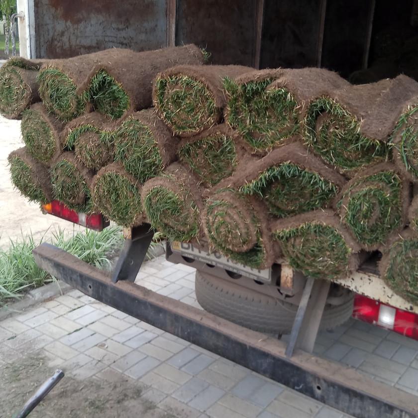 Рулонный газон купить Одессе