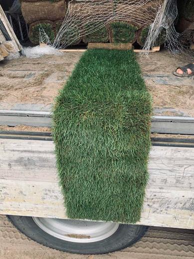 Доставка травы газонной в рулонах в Одессу