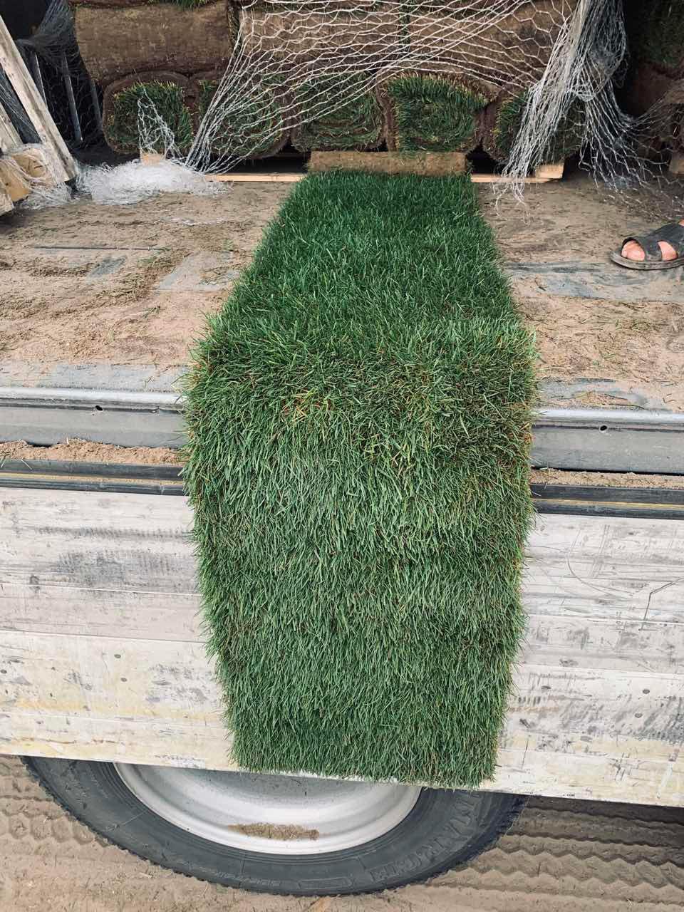 Продажа Рулонного газона в Одессе