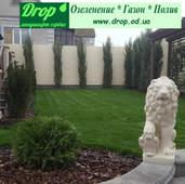 Озеленення території дома.Овідіополь. Одеська область