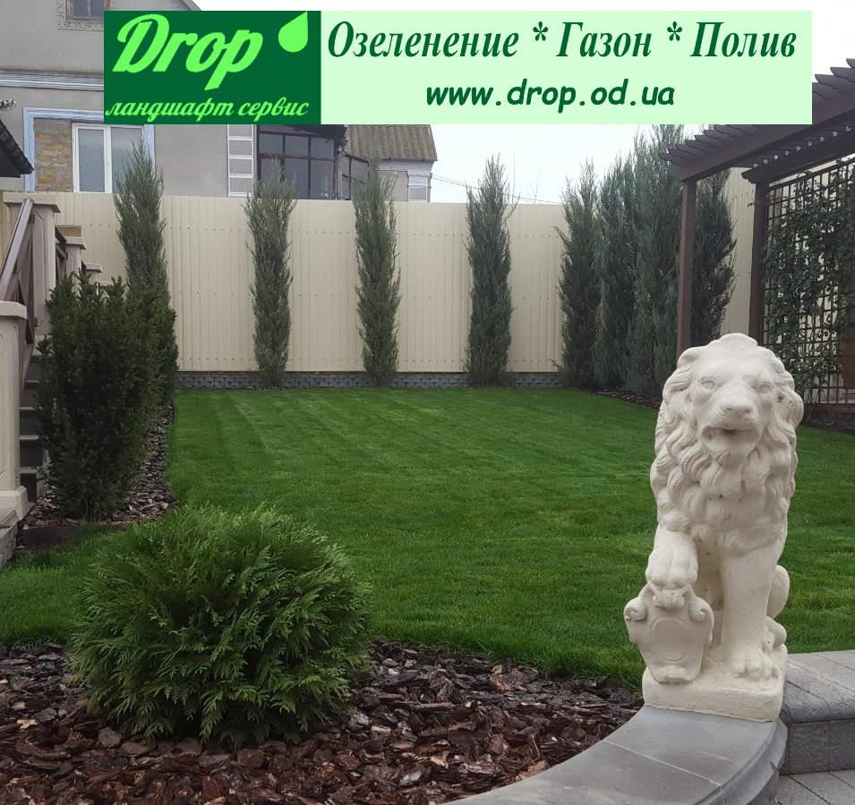 Озеленение территории дома.Овидиополь . Одесская область