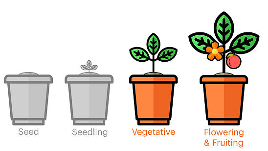 growth-stages-1.jpg