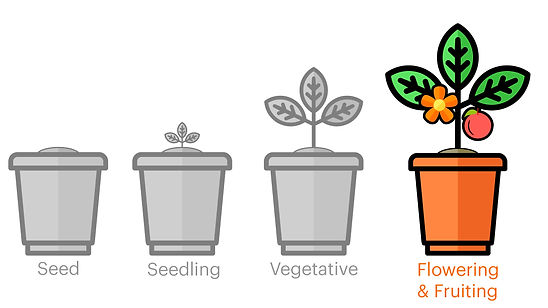 growth-stages-3.jpg