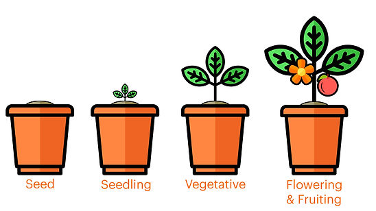 growth-stages-4.jpg