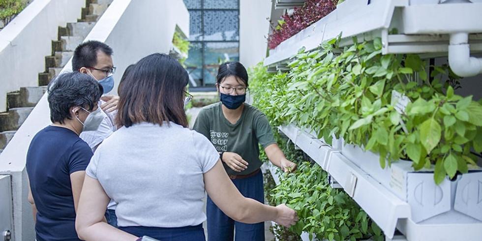 Funan Urban Farm Tour by Edible Garden City