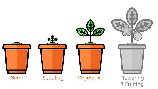growth-stages-2.jpg