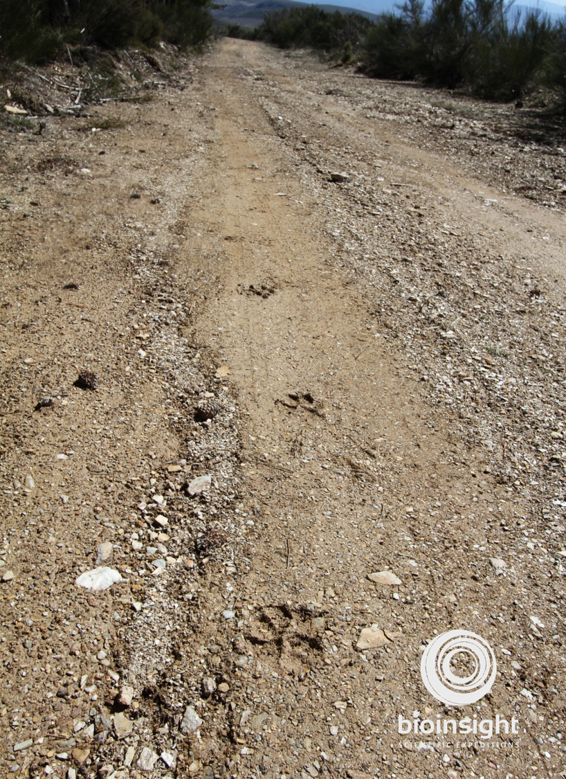 PineForest_Footprints(2)