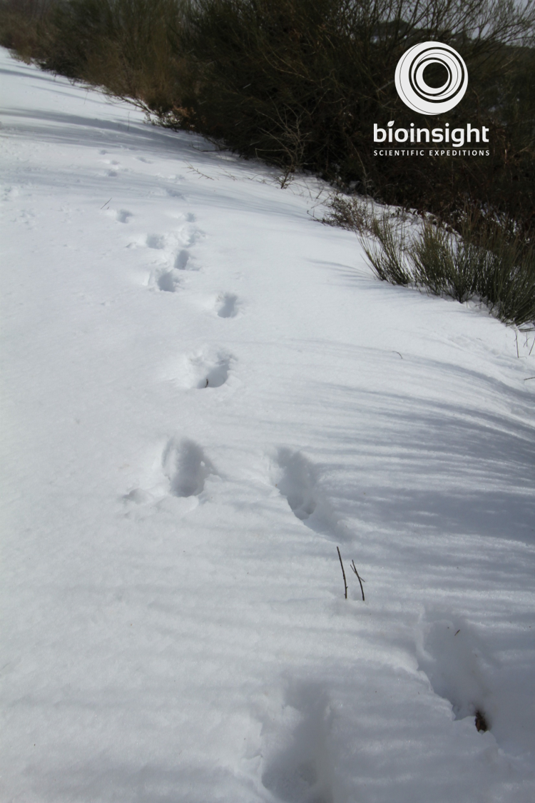 Snow_Footprints(2)