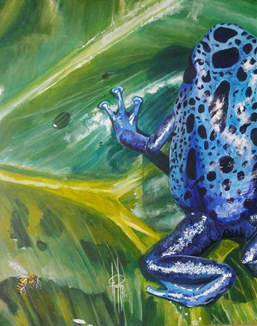 poison dart frog web.jpg