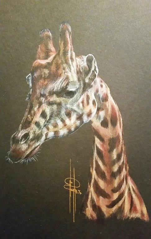 giraffe fb.jpg