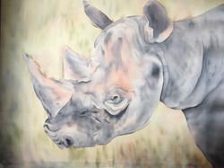 Endangered - Rhino