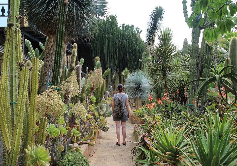giardino-esotico-pallanca-bordighera-03.