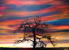 Kimberly's Tree