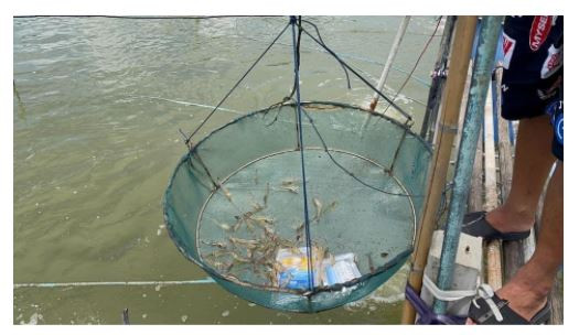 When pathogens become invincible: the antimicrobial resistance issue in aquaculture