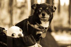Hiking Chihuahua's