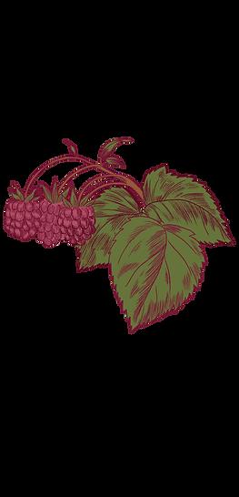 Raspberry_Plant 2.png