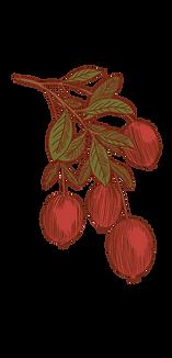 Cranberry_Plant 2.png
