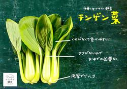 チンゲン菜