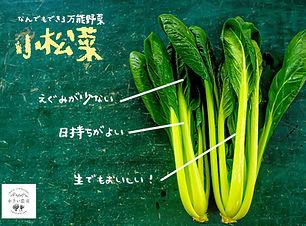 小松菜.jpg