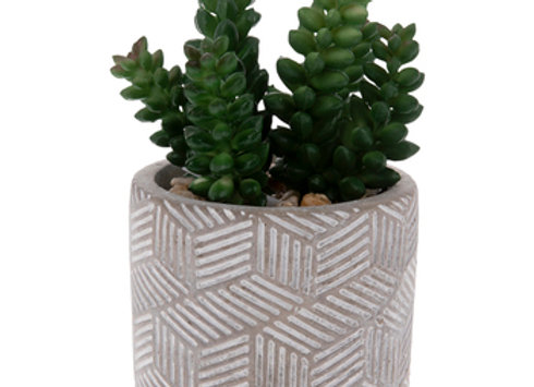 Carved Cement Pot With Succulents