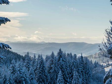 Wintertypen verstecken sich gerne in schlammgrün