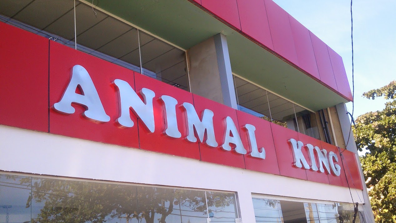 Animal King.jpg