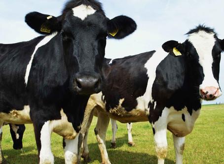 """Consumo de carne tem que ser reduzido em 90% para evitar """"colapso climático""""!  """