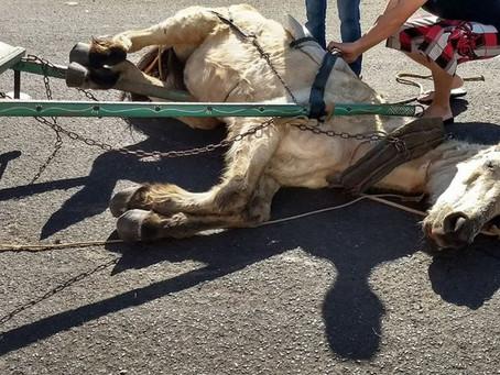 Artigo da UFPR com crítica à lei catarinense que reduziu cavalos a coisas está entre os  premiados.
