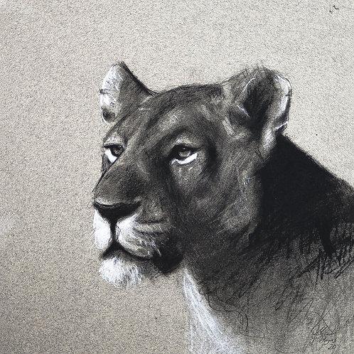 """Lioness"" - Fine Art Print - A4"